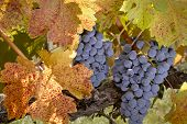 Autumn Harvest Time