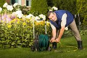Senior man crimping hose in the garden