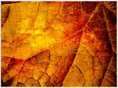 Grunge autumn leaf background
