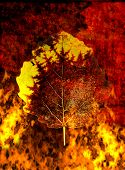 Old autumn leaf on fire