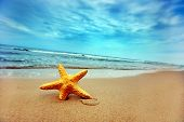 pic of summer beach  - Starfish on the Beach  - JPG