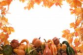 Pumpkins And Gourds With Fall Leaves