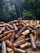A forest and its future, a bunch of logs.