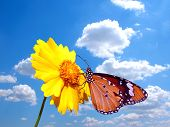 stock photo of butterfly flowers  - Butterfly on flower with cloudy sky back ground - JPG
