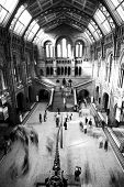 Natural history museum in black and white.