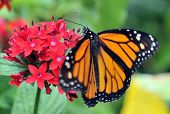 stock photo of butterfly flowers  - Butterfly on flower - JPG