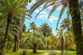 Palm Trees In The Park. Subtropical Climate . poster