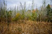 Wetland Conservation. Panoramic Scenic Landscape Of Preserved Wetlands In The Upper Peninsula Of Nor poster