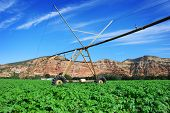 Pivot irrigation system in a potato field