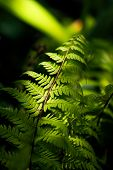 A Green Fern Grows In A Forest In Summertime. poster