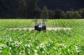 foto of potato-field  - Tractor working on a potato farm - JPG