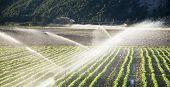 Irrigation sprinklers watering a farm field