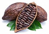 Cocoa pods and cocoa beans - chocolate basis isolated on a white background. poster