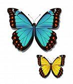 Vector illustration of butterflies