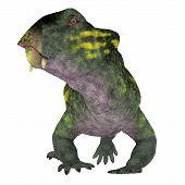 Lystrosaurus Dinosaur Head 3d Illustration - Lystrosaurus Was A Dicynodont Therapsid Herbivore Dinos poster