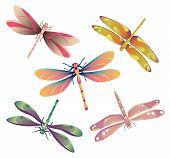stock photo of dragonflies  - Vector illustration of five dragonflies - JPG