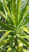 A Yuka Palm Trees Green Botany Background poster
