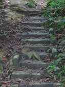 Forest Steps
