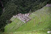 Ancient Ruins Of Winay Wayna