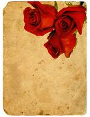 Red Roses. Old Postcard.