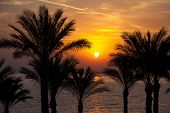 The sun rising over palm trees and the Red Sea, South Sinai, Egypt.