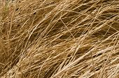 Wheat For Backgrounds And Wallpapers