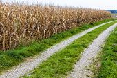 image of biogas  - a path next to a cornfield - JPG