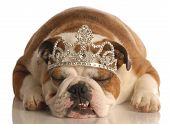 Bulldog With Tiara