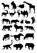 Animal Collection 1 poster