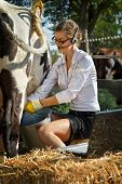 stock photo of milkmaid  - Young woman milking cow on farm - JPG