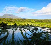 Rice fields and mountains on the horizon at sunny day. Bali. Indonesia