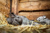 stock photo of rabbit hutch  - Young rabbits in a hutch  - JPG