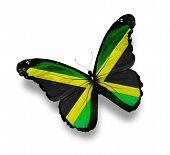 Borboleta de bandeira jamaicana, isolada no branco