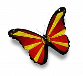 Macedonian Flag Butterfly, Isolated On White