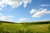 Cornfield Landscape