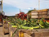 Corn And Farm Tractors