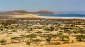 stock photo of ethiopia  - Acacia trees and sparse vegetation in the dry savannah grasslands in Abjatta - JPG