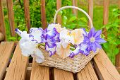 stock photo of purple iris  - Basket with freshly cut irises flowers at garden - JPG