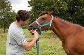 Jovem desparasitação um cavalo baía com um colar de vermífugo