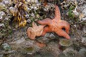 Sea Star & Friend