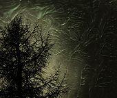 Постер, плакат: Мистик дерево