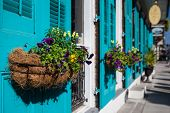New Orleans Flowers
