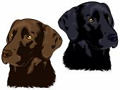 stock photo of chocolate lab  - illustration of two Labrador retriever dog heads - JPG