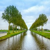 Tree Rows On The Canal Sides And Reflection On Water Near Amsterdam. Netherlands
