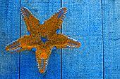 Yellow Starfish On Blue Decking Background
