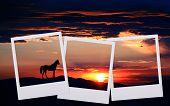 Sunset Film