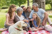 Portrait of an extended family with their pet dog sitting at the park