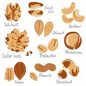 stylized nuts icons