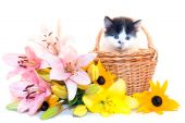 Little Kitten And Flowers