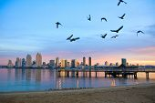picture of sea-scape  - San Diego city scape at dawn with seagulls flying in the foreground - JPG